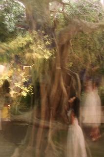 http://rieko-sugihara.com/photo_essay/item/20130219s-IMG_1859%20banyan%20watashi.jpg