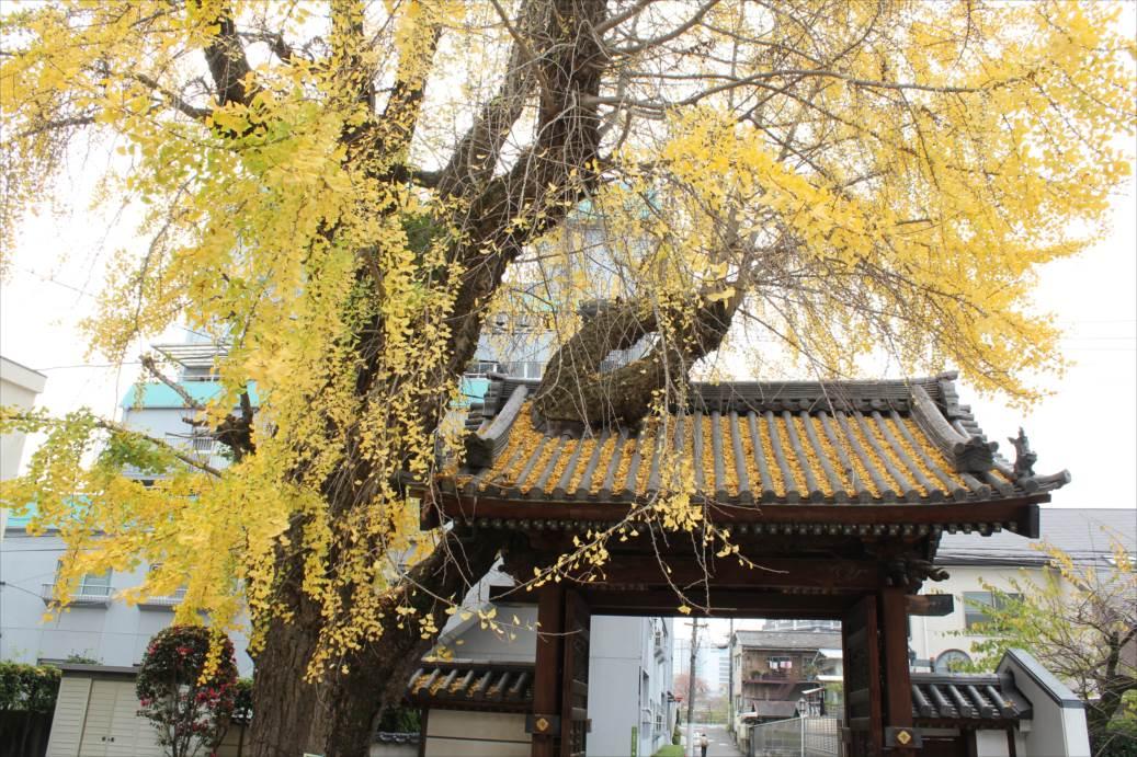 http://rieko-sugihara.com/photo_essay/item/IMG_0570_R.JPG