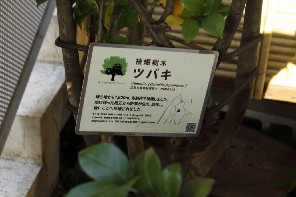 http://rieko-sugihara.com/photo_essay/item/IMG_0996_R.JPG