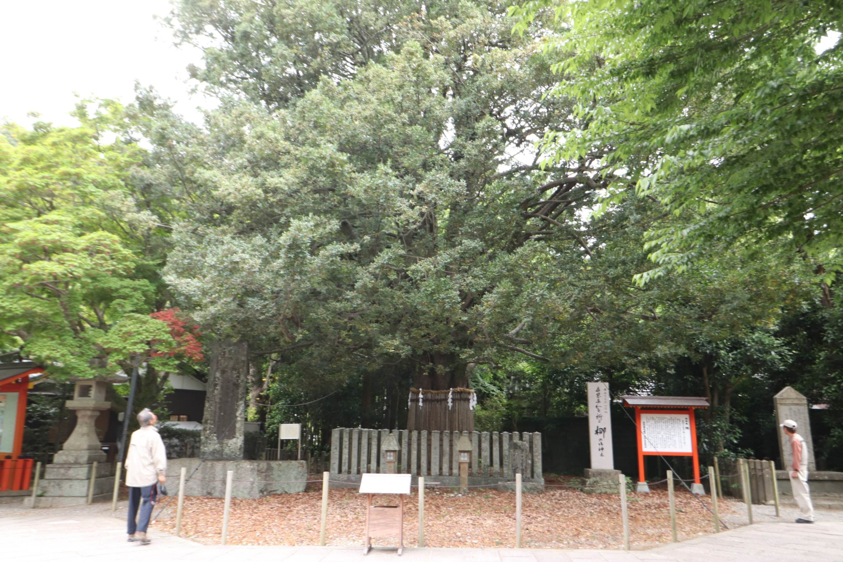 http://rieko-sugihara.com/photo_essay/item/IMG_1801_R.JPG