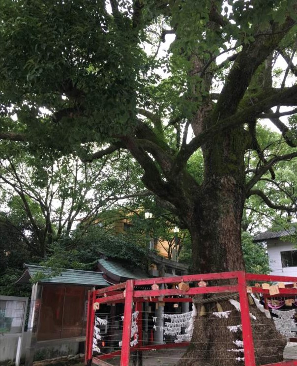 http://rieko-sugihara.com/photo_essay/item/IMG_3223_R.JPG