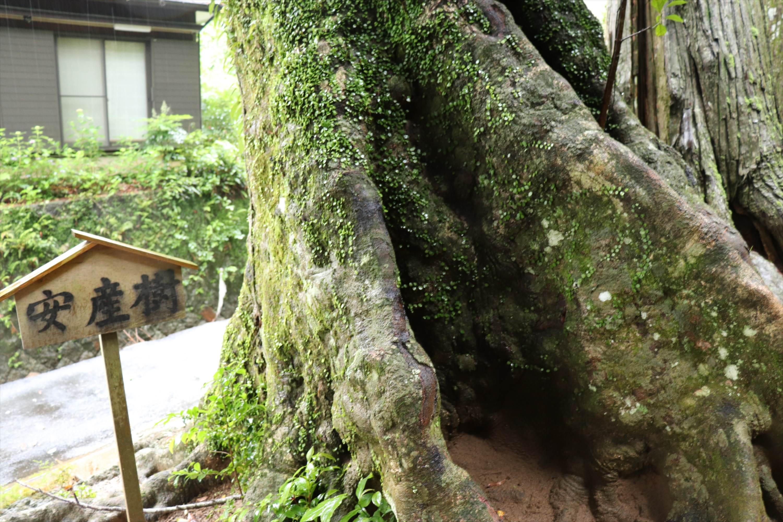 http://rieko-sugihara.com/photo_essay/item/IMG_6312_R.JPG
