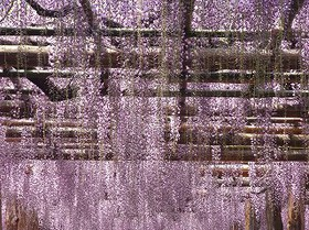 s1 12FujidanaRIMG0140 (2).jpg