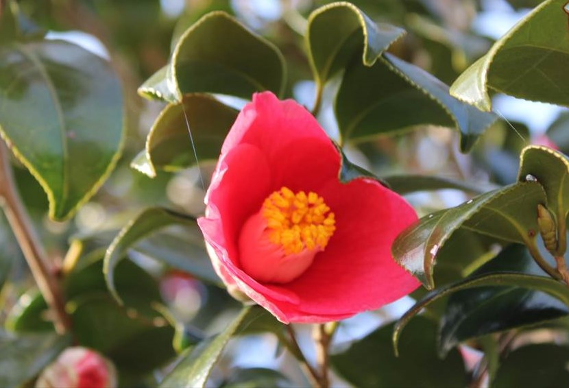http://rieko-sugihara.com/tree_flower/item/IMG_6670_R.JPG