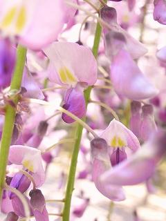 http://rieko-sugihara.com/tree_flower/item/s%EF%BC%93FujiRIMG0265%20%282%29.jpg