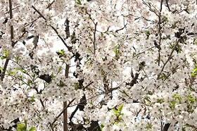 http://rieko-sugihara.com/tree_memory/assets_c/2013/11/s-IMG_0007-thumb-280x186-579.jpg