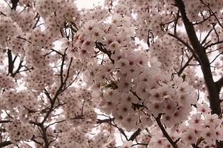 http://rieko-sugihara.com/tree_memory/item/s-IMG_0482.jpg